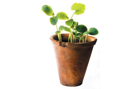 plant_468