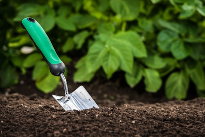 Gardening shovel in the soil in front of green leaves