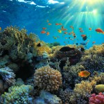 5 ways to support sea change for World Oceans Day