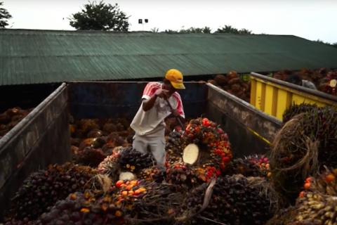 Palm Oil Plantation Indonesia-43a6a929d372688fdb955329e986edcd5033d38a