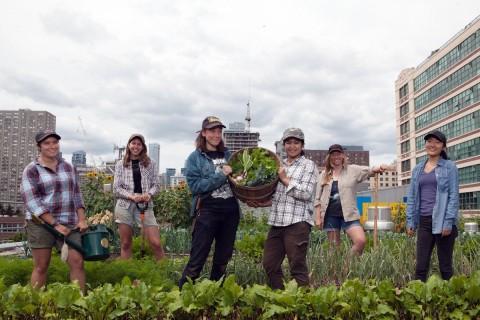 Ryerson Urban Farm